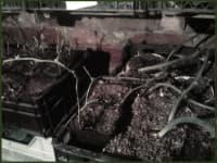 Короткий обзор зимнего хранения саженцев ежевики