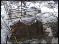 саженцы в зимовальной яме